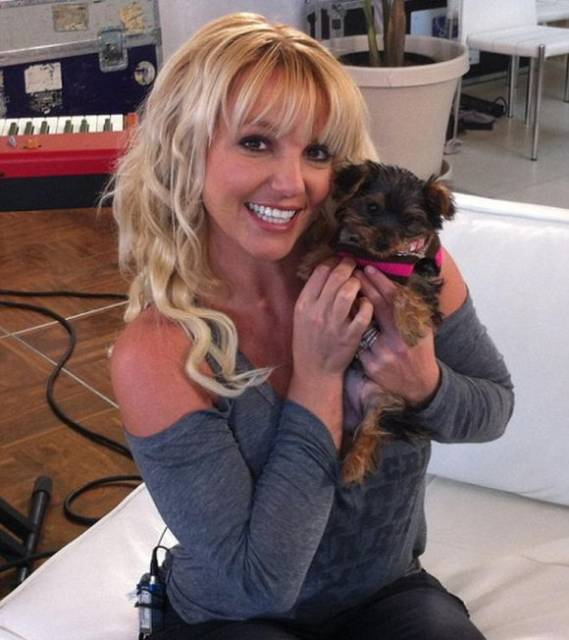 Recently Britney Spears has bought a new puppy, Hannah