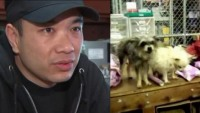Hollywood businessman gets his pet dogs cloned for $310,000