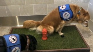 Restroom for your pet worth $75,000 at Detroit Airport