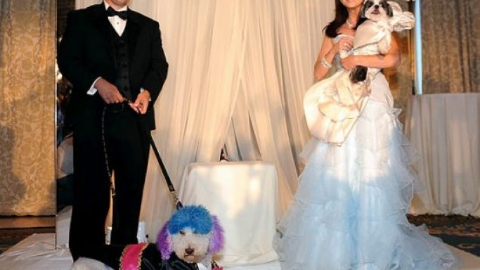 The most expensive pet wedding in history costed $250,000