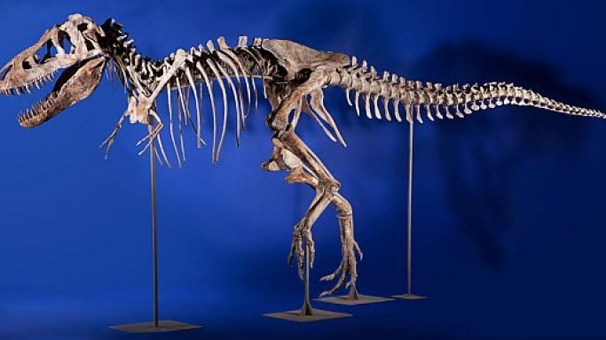 Tyrannosaurus skeleton may bring more than $1 million at Heritage Auctions' Natural History sale